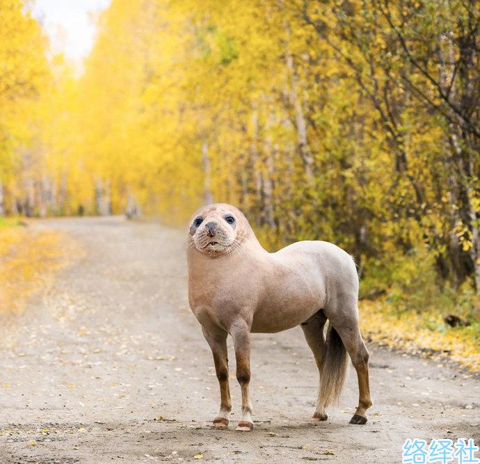 超奇葩图片,挪威程序员用ps动物换脸创作出新物种