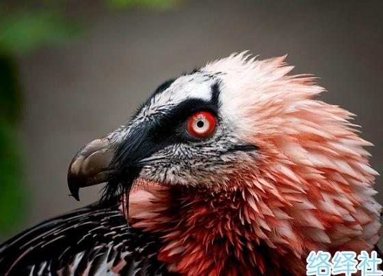 15个有趣的动物冷知识,隐藏在生物界的惊奇事实!