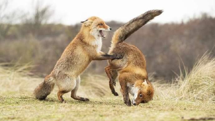 2019年度野生动物搞笑图片摄影大奖赛优秀作品!
