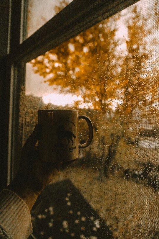 落寞萧瑟却也唯美的秋色