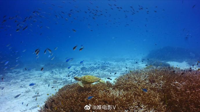 IMAX | 海龟奥德赛 4k/蓝光/超清