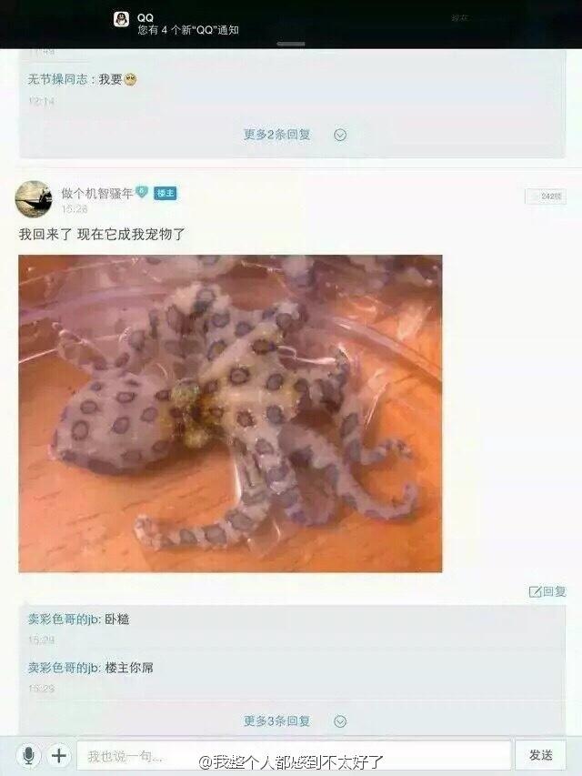涨知识 百毒不侵的中国人! 蓝环章鱼已经乖乖服软 4