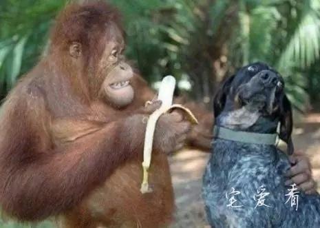 段子大全,大香蕉给你吃小伙