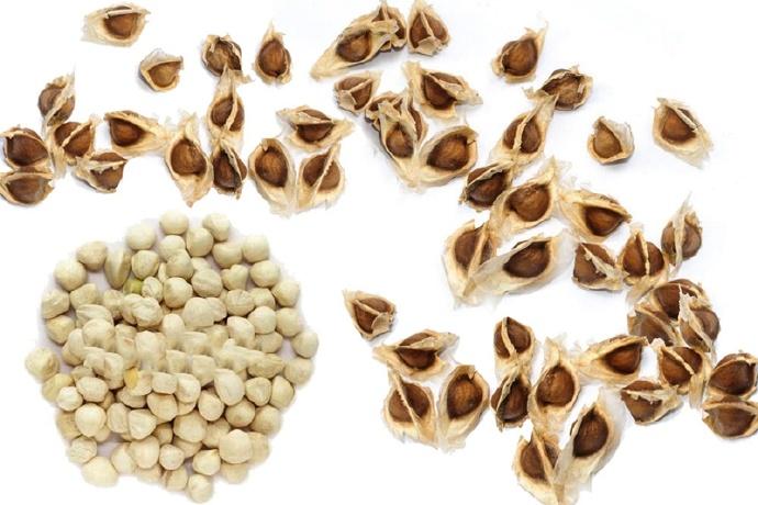 辣木籽 10 种令人难以置信的健康益处 健康百科