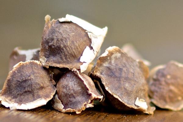 辣木籽该怎么吃?吃多少合适? 辣木籽