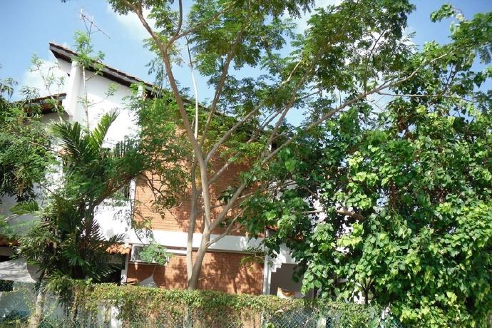 如何在庭院里栽种一颗辣木树 辣木种植