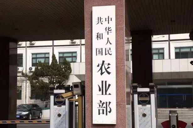 中国辣木产业联盟之「农业部南亚热带作物开发中心」