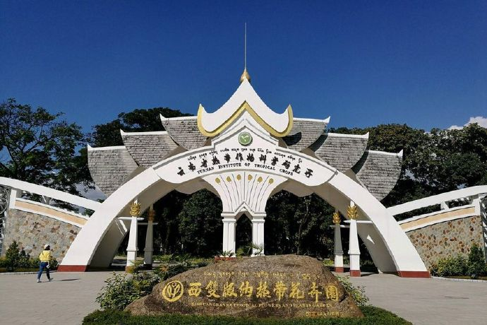 中国辣木产业联盟之「云南省热带作物科学研究所」