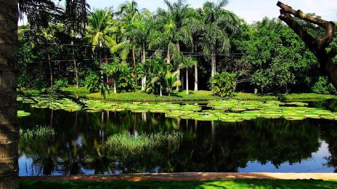 中国辣木产业联盟之「云南省热带作物科学研究所」 辣木企业