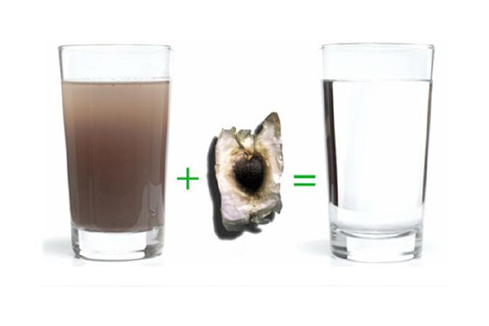 将「辣木种子净水」饮用该怎么做?