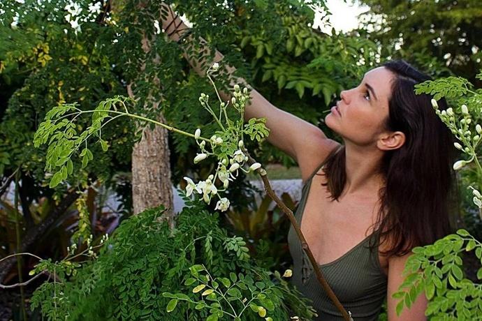 辣木,健康和生命之树的美丽邂逅