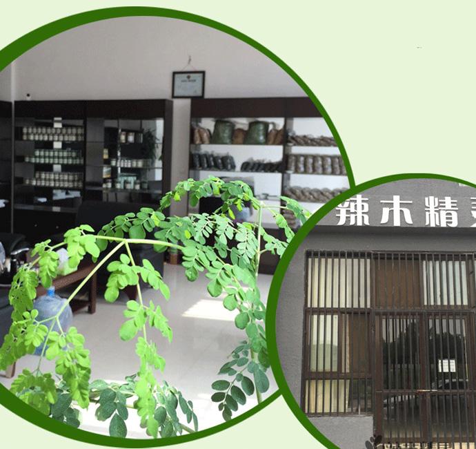 中国辣木产业联盟之「辣木精灵」 辣木企业