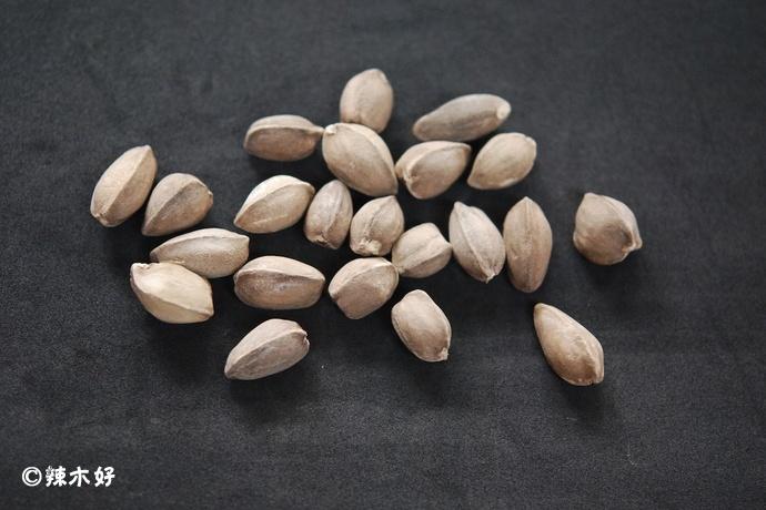 食用品种:阿拉伯辣木简介(Moringa peregrina)
