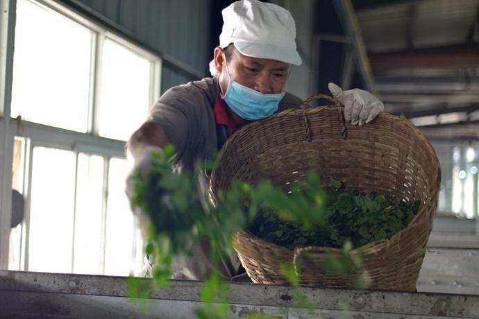 中国最大的辣木品牌「云天佑」