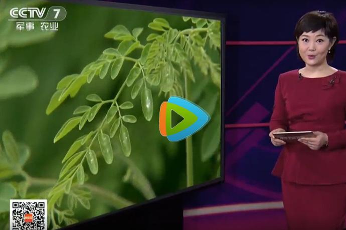 央视 CCTV-7 科技苑「神奇的辣木」171225 认识辣木