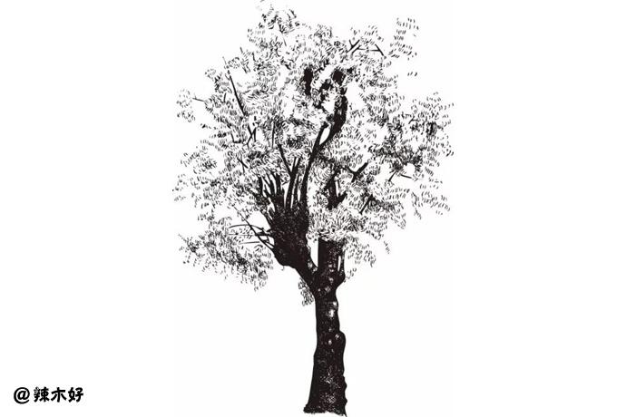 中国云南芒市「百年辣木古树」营养检测研究探索