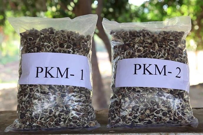 印度辣木树品种和 PKM-1、PKM-2 之间的差别