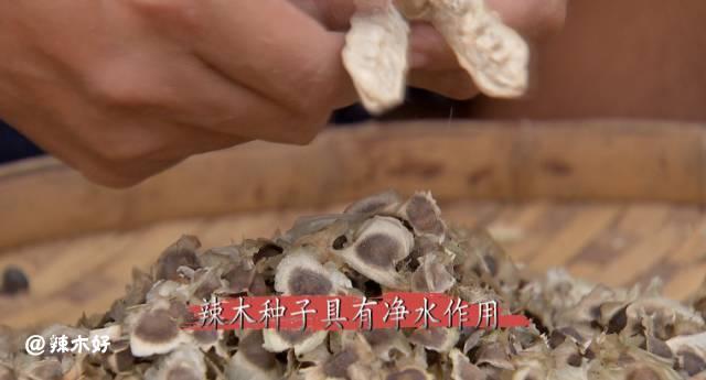 央视点赞辣木三宝,食医良品 健康百科