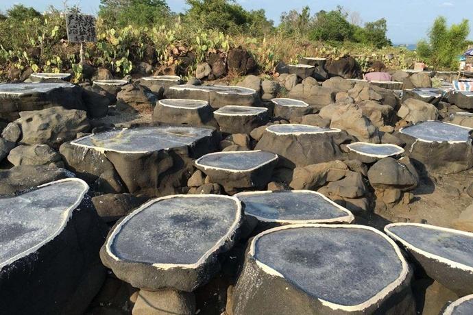 中国原产辣木栽培年代比「引种印度辣木」早八百年