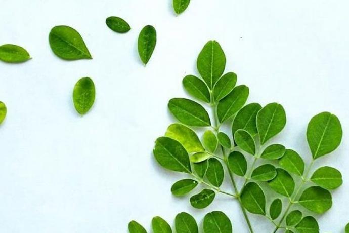解培惠:吃树叶的时代一定会到来(云南信息报)
