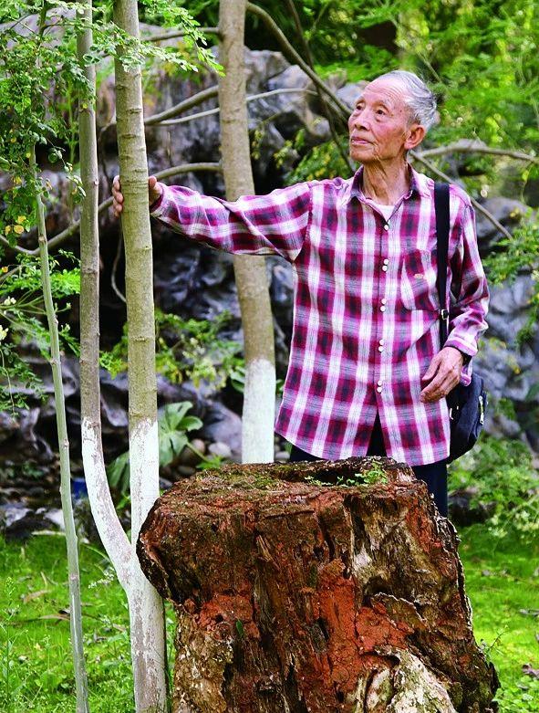 十年种树,解培惠终克金沙江干热河谷生态难题(四川新闻网) 辣木种植