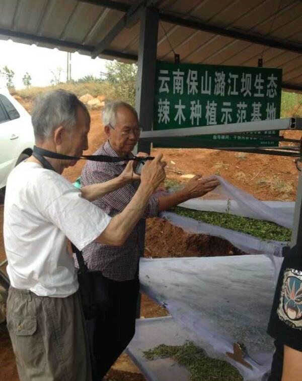 解培惠:解读保山大红山基地辣木密码(九龙网) 辣木种植