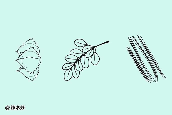 3 种辣木中氮、磷、钾、钙和镁元素含量的比较