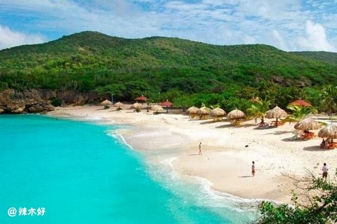 库拉索辣木 Moringa In Curacao