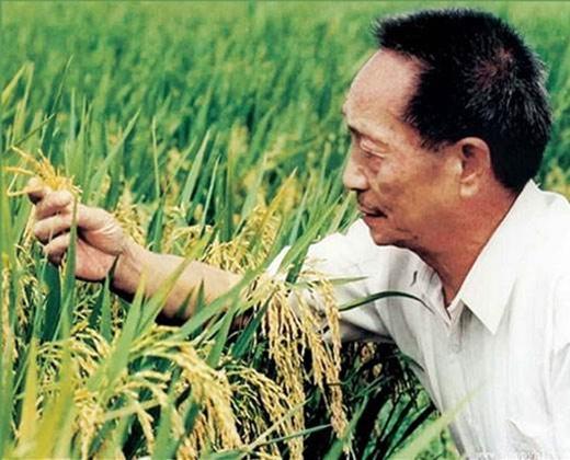 高富硒辣木,是中国辣木人对社会的一大贡献