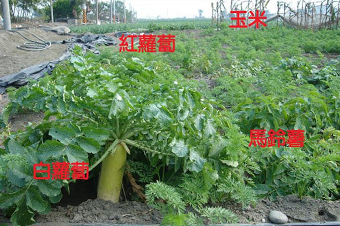 种植致富新趋势,立体混合种植农庄 农村种植赚钱