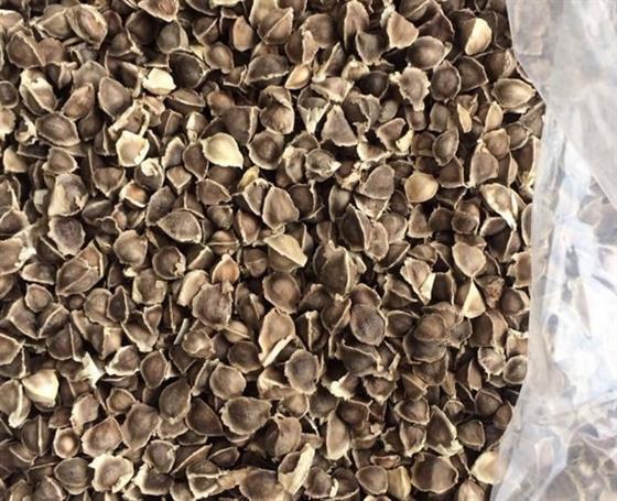 印度辣木籽和非洲辣木籽怎么辨别,有图有真相 辣木籽