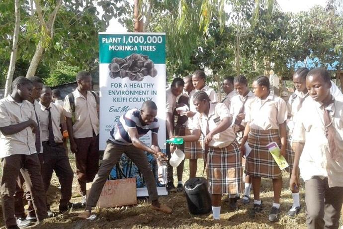 肯尼亚正在推广种植 100 万棵辣木树