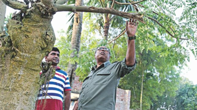 孟加拉国:农民们正在准备种植更多的辣木树