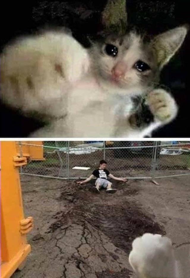 猫咪一拳把你打趴下