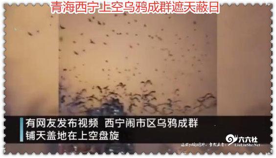 青海西宁上空乌鸦成群遮天蔽日 这是什么预兆?