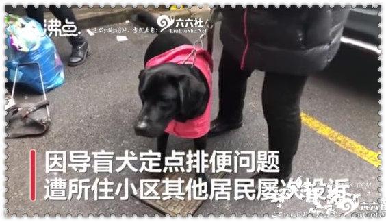 视障阿姨因导盲犬排尿被邻居投诉2年 为什么会被投诉? liuliushe.net六六社 第1张