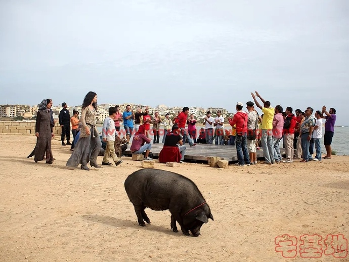 最新电影推荐「长翅膀的猪」豆瓣影评:彼岸不在远处,而在脚下
