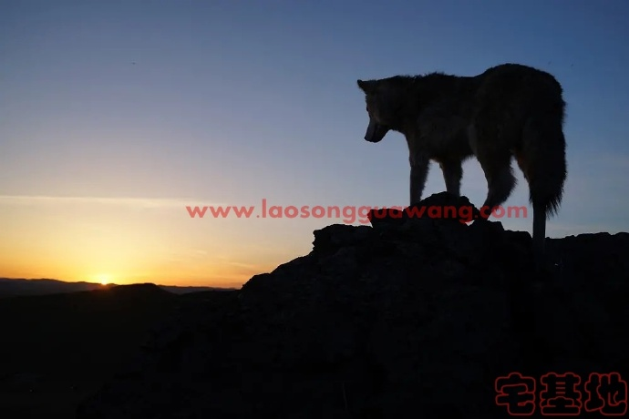 最新电影推荐「狼图腾」豆瓣影评:狼演得真好,驯兽师辛苦了插图2