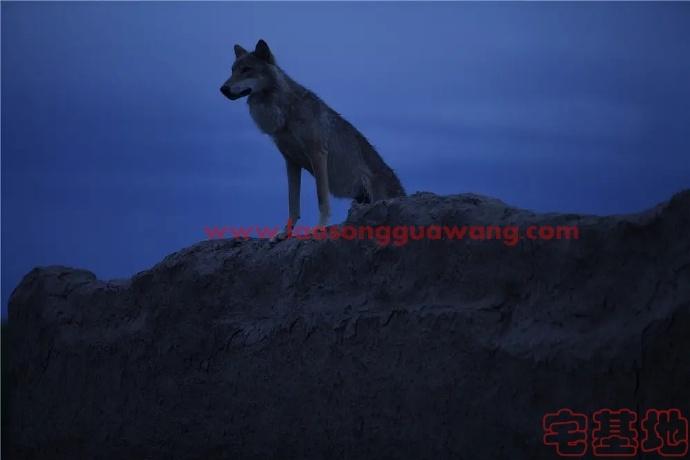 最新电影推荐「狼图腾」豆瓣影评:狼演得真好,驯兽师辛苦了插图1