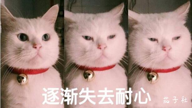 中山ふみか(中山文香)H杯是真香~