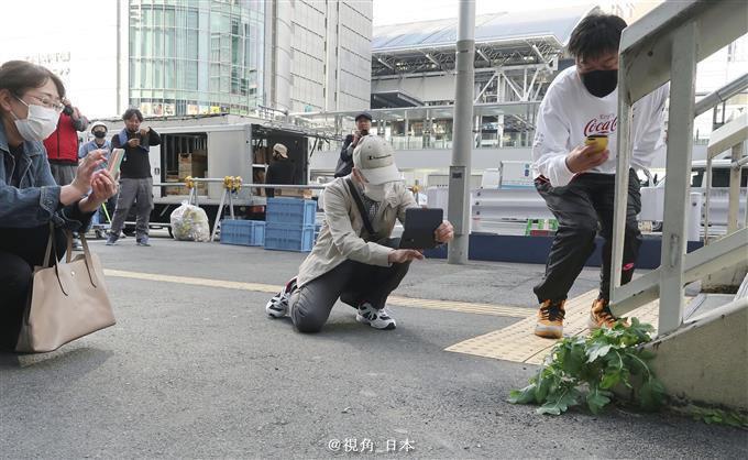 大阪站前出现一根「超坚强的萝卜」