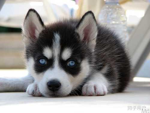 白眼狼是怎么养成的?