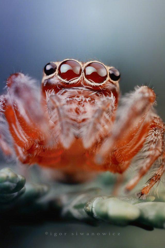 动物微距摄影,太酷了!