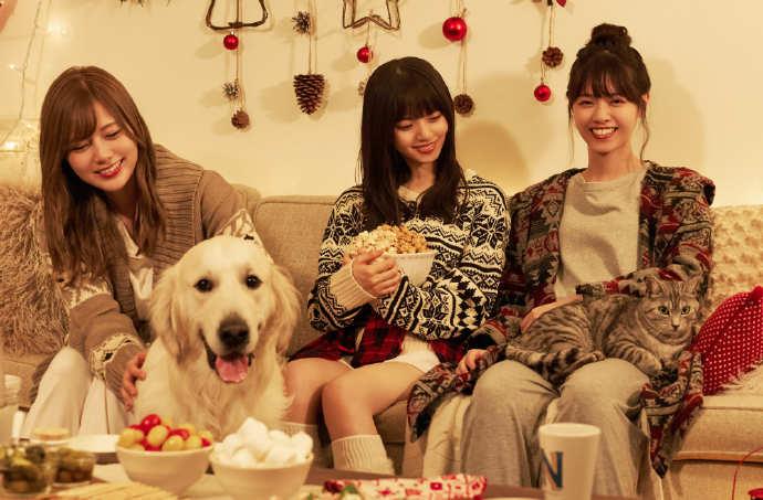 犬と、猫と、乃木坂と。