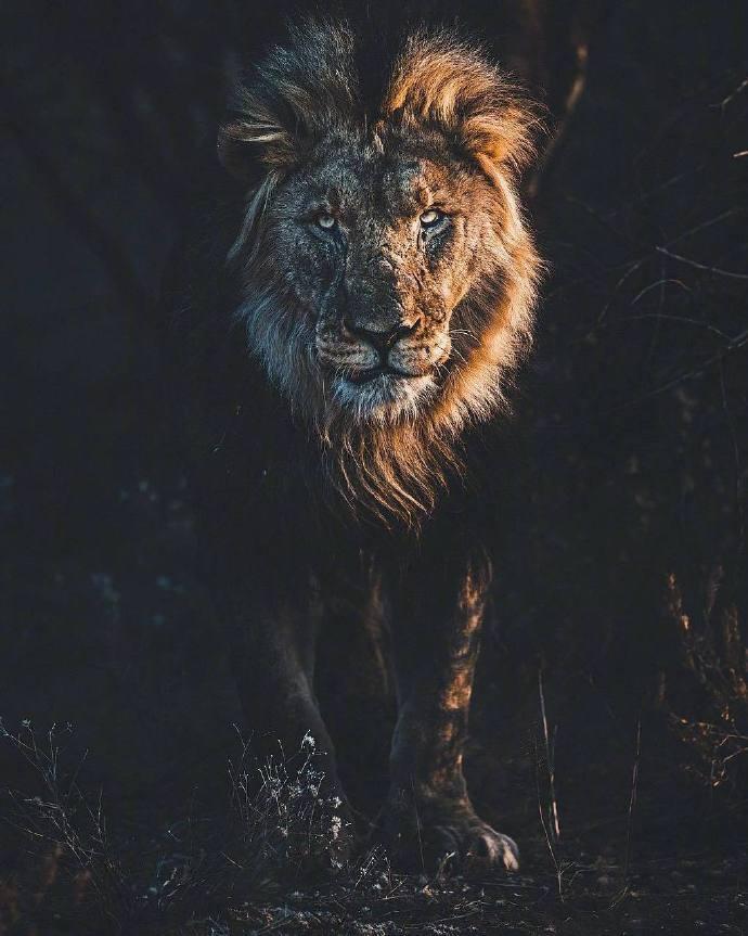 美国摄影师Donal镜头下纳米比亚的神奇动物世界