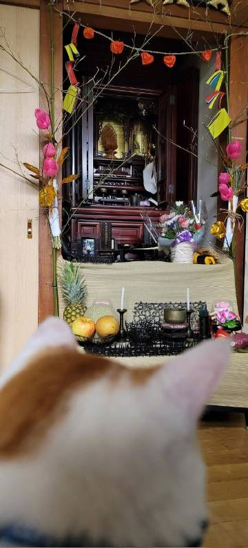 萌宠图片推主在盂兰盆节准备祭祖时...-萌宠
