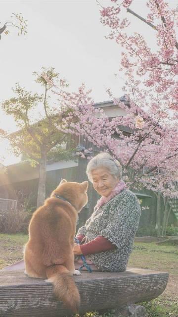 萌宠图片奶奶和柴柴-萌宠