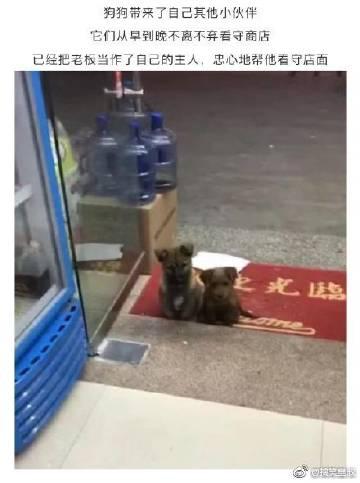 便利店老板好心喂小狗一次...