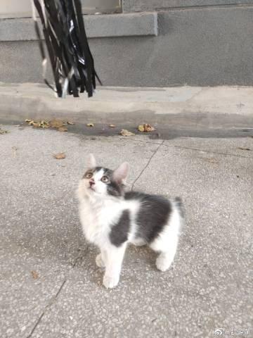 广州猫咪领养