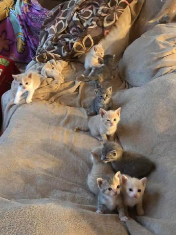 萌宠图片## 你沙发长猫啦-萌宠